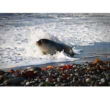 Surf Baby Photographic Print