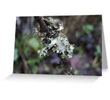 Lichens 1 Greeting Card