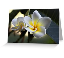 Frangipani #2 Greeting Card