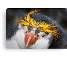 Royal Penguin Canvas Print