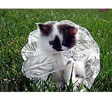 Pandee: Kitty in Crystal Photographic Print