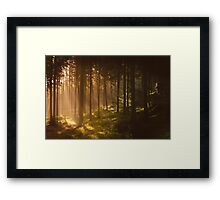 Morning forest Framed Print