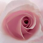 Soft Love by Pam Hogg