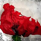 Red....Very Red! by Irene Walters