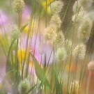 Soft Grasses and Flowers by Shirley Cross