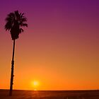 Californication by Barry J Merluzzo