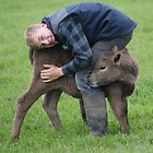 friendly calf by Mikayla House