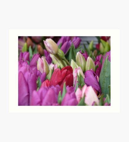 Multi-colored Tulips Art Print