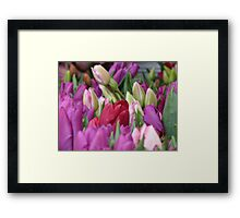 Multi-colored Tulips Framed Print