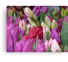 Multi-colored Tulips Canvas Print