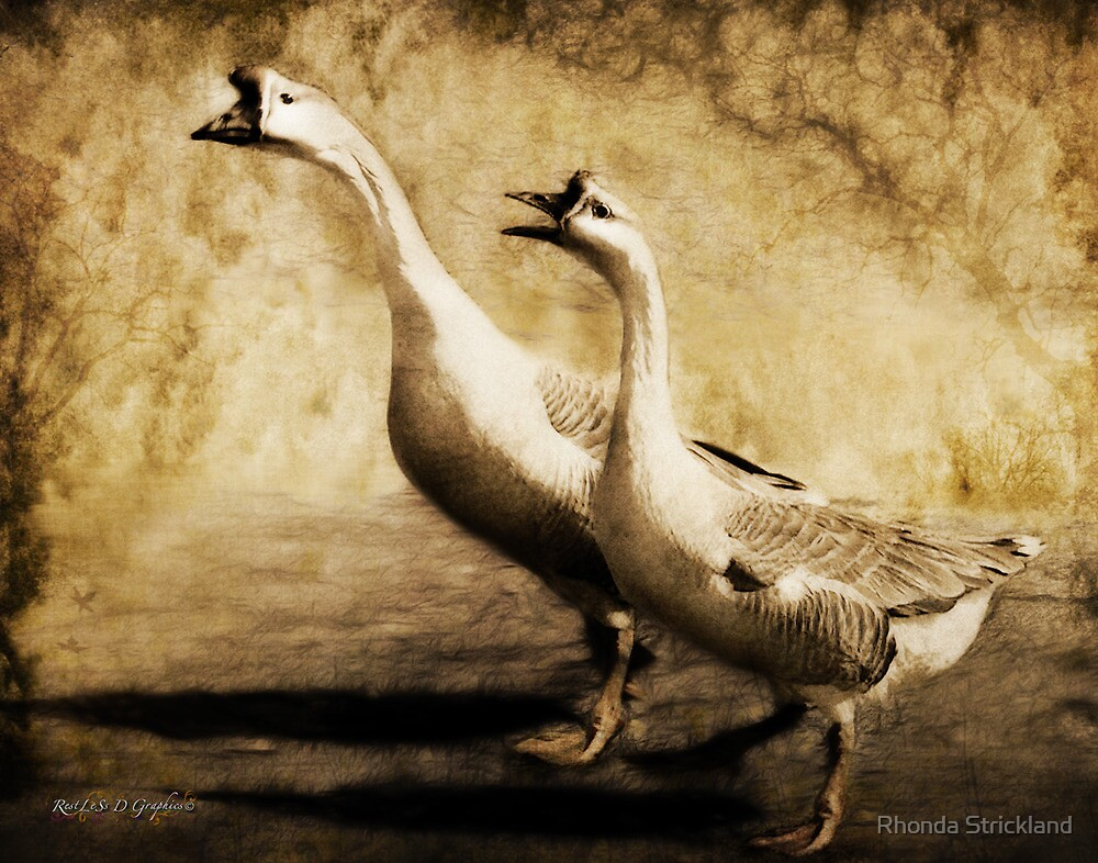Gabbing Geese Go Walking (Art & Poetry) by Rhonda Strickland