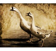 Gabbing Geese Go Walking (Art & Poetry) Photographic Print