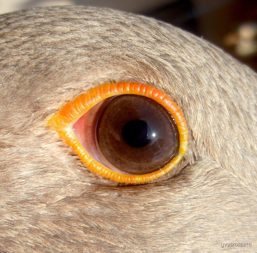 orange ring by yvesrossetti