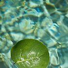 Leaf no. 2 by judewatson