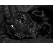 puppy love Photographic Print