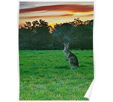 Macropus Giganteus (Skippy The Killer Kangaroo) Poster