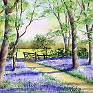 Bluebell path by Ann Mortimer
