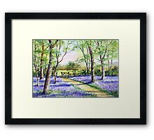 Bluebell path Framed Print
