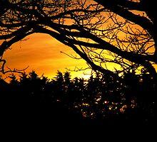 Sunset over Sark by Chris Cardwell