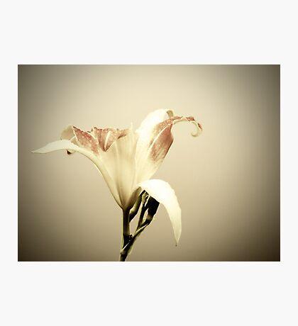 Joseph's Lily Photographic Print