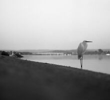the seagull by sharpbokeh