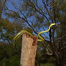 Green Tree Snake by NickBlake