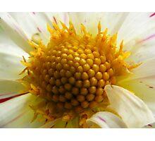 Floral Ferrero Rocher Photographic Print