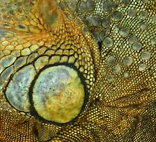 YELLOW LIVERED LIZARD SKIN by IngridSonja