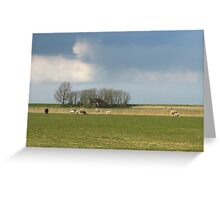 Polder landscape with sheep in Friesland in Holland Greeting Card