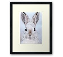 A Mad Hare Day / Snowshoe Hare Framed Print