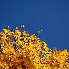 The Wonderful World Of Nature II by PhotoJK