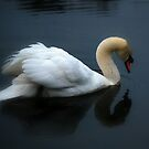 Swan on a Foggy Pond by madman4