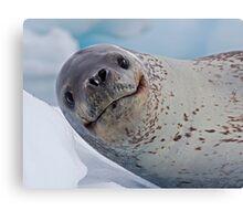 Smile!  You've just seen lunch! (Leopard Seal, Pleneau Island, Antarctica) Canvas Print