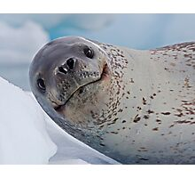 Smile!  You've just seen lunch! (Leopard Seal, Pleneau Island, Antarctica) Photographic Print