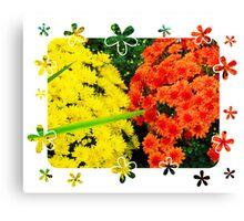 Yellow & Orange Mums Canvas Print