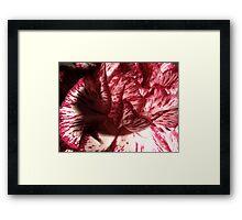 Carnation Macro Framed Print