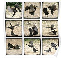 Bickering Blackbirds Poster