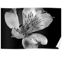 The Beauty of Black & White Poster