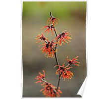 Wispy red flowers Poster