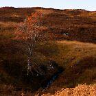 Lone tree in Glen Lyon by Cliff Williams