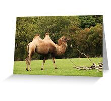 Got the hump hump Greeting Card