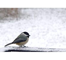 Cold but Cute Chickadee 1 Photographic Print