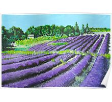 Lavender Provence Poster