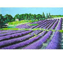 Lavender Provence Photographic Print