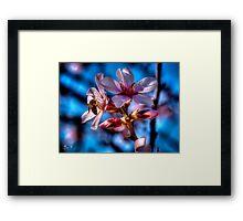 Almond tree in bloom Framed Print