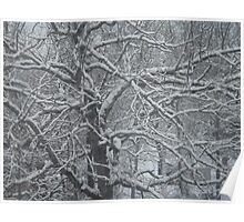 Tangled Maze of Limbs and Snow Poster
