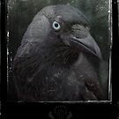 Portrait of a Raven by Rookwood Studio ©