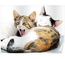 Santorini Kittens Poster