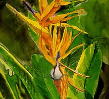 Bird of Paradise by Marie Luise  Strohmenger