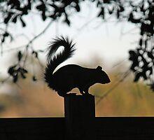 Squirrel Silhouette by RebeccaBlackman